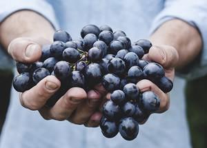 grapes-690230_640_1