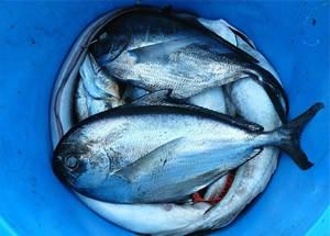 Fische_1